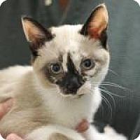 Adopt A Pet :: Isles - El Cajon, CA