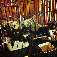 Adopt A Pet :: Quinn, Senna, Ariel, Pacey - Long Beach, CA