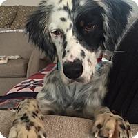 Adopt A Pet :: QUINN - Pine Grove, PA