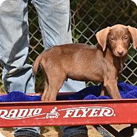Adopt A Pet :: Jakob - Charlemont, MA
