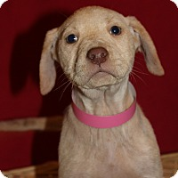 Adopt A Pet :: Nell - Waldorf, MD