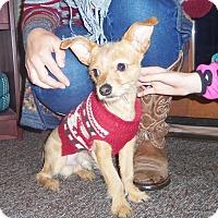 Adopt A Pet :: SPARKY - Medford, WI