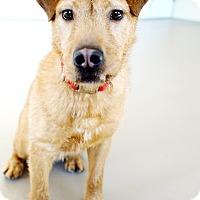 Adopt A Pet :: Skippy *Foster* - Appleton, WI