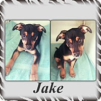 Adopt A Pet :: Jake 1 Adoption pending - Manchester, CT