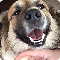 Adopt A Pet :: Buster-pending adoption - Manchester, CT