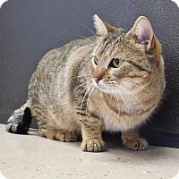 Adopt A Pet :: Hoppy - St. Francisville, LA