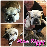 Adopt A Pet :: Miss Piggy - Garden City, MI