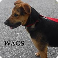 Adopt A Pet :: Wags - Batesville, AR
