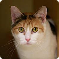 Adopt A Pet :: Foxy Maria - Kettering, OH