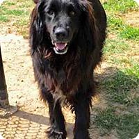 Adopt A Pet :: Mitch - BIRMINGHAM, AL
