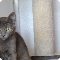 Adopt A Pet :: CiCi - St. Charles, MO