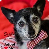 Adopt A Pet :: Syd - Mesa, AZ