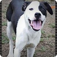 Adopt A Pet :: CeCe - Ahoskie, NC