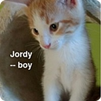 Domestic Shorthair Kitten for adoption in Atlanta, Georgia - Jordy