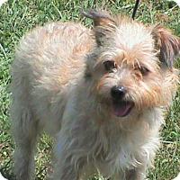 Adopt A Pet :: Max - Maynardville, TN