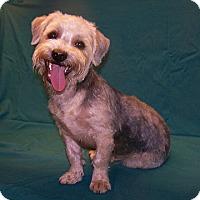 Adopt A Pet :: 16-d10-023 Bucky - Fayetteville, TN