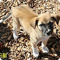 Adopt A Pet :: Selina - Lawrenceburg, TN