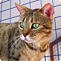 Adopt A Pet :: Kala - Davis, CA
