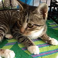 Adopt A Pet :: Sweetheart (KJ) 6.12.16 - Orlando, FL