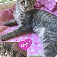Adopt A Pet :: Kasha - Toledo, OH