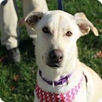 Adopt A Pet :: LUNA - Brewster, MA