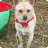 Adopt A Pet :: Tina - Godley, TX