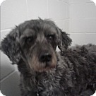 Adopt A Pet :: Riley #2
