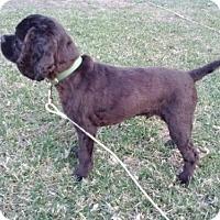 Adopt A Pet :: Blitzen - Hudson, WI