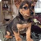 Adopt A Pet :: Seven Dwarfs Doc