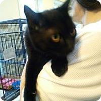 Adopt A Pet :: Blackie II - East Stroudsburg, PA