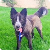 Adopt A Pet :: Foster - Scottsdale, AZ
