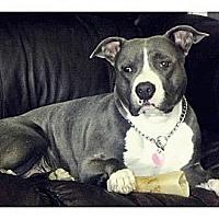 Adopt A Pet :: Daisy - Louisville, KY