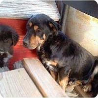 Adopt A Pet :: Daddy - Alliance, NE