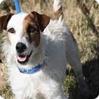 Adopt A Pet :: Woody in Austin - San Antonio, TX
