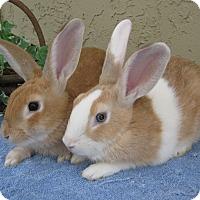 Adopt A Pet :: Blake and Miranda - Bonita, CA