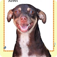 Adopt A Pet :: Rebel and Rusty - Los Angeles, CA