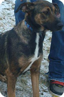German Shepherd Dog/Labrador Retriever Mix Dog for adoption in Crookston, Minnesota - Zoey