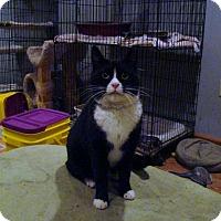 Adopt A Pet :: Ria - Muncie, IN