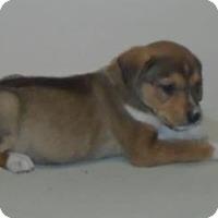 Adopt A Pet :: Lou - Gary, IN