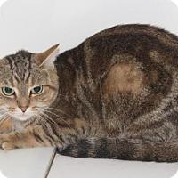 Adopt A Pet :: Fizz - Hamilton, ON