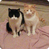 Adopt A Pet :: Orion & Comet - Canton, OH
