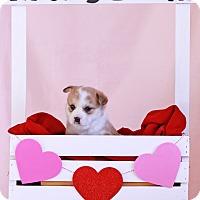 Adopt A Pet :: Ross - Waldorf, MD