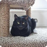 Adopt A Pet :: Jesse - East Norriton, PA