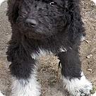Adopt A Pet :: Ernie / pup - adopted