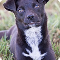 Adopt A Pet :: Penny - Patterson, CA