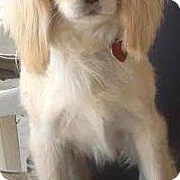 Adopt A Pet :: Jonesy - Santa Barbara, CA