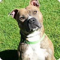 Adopt A Pet :: Gunther - Gardnerville, NV