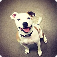 Adopt A Pet :: Fallon - Flossmoor, IL