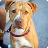 Adopt A Pet :: Patches - Bronx, NY