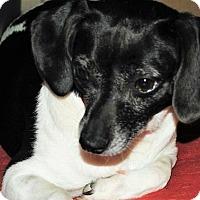 Terrier (Unknown Type, Medium) Mix Dog for adoption in Centralia, Illinois - Sadie